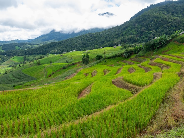 9월 우기에 구름 안개가 끼는 pa bongpiang 마을의 산 사다리 경사면에 있는 신선한 녹색 라이스 테라스 풍경, 태국 치앙마이