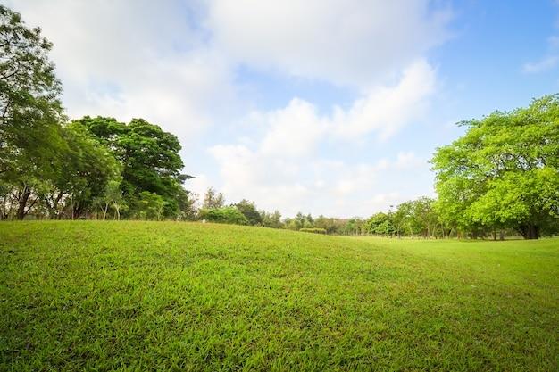 Пейзаж поля для гольфа