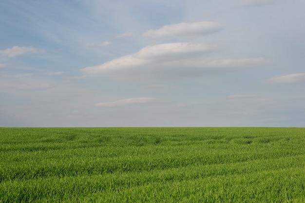 흐린 하늘에 대 한 잔디 필드의 풍경