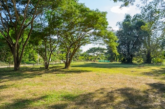 Landscape of grass field and green environment public park in Pai, Thailand