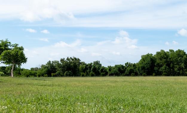 青い空と芝生のフィールドと緑豊かな環境公園の風景。