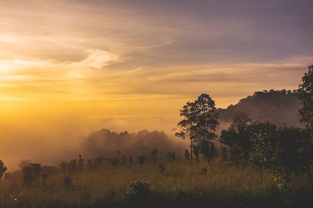 Пейзаж пастбищ и деревьев в национальном парке тхунг салаенг луанг, провинция пхетчабун, таиланд