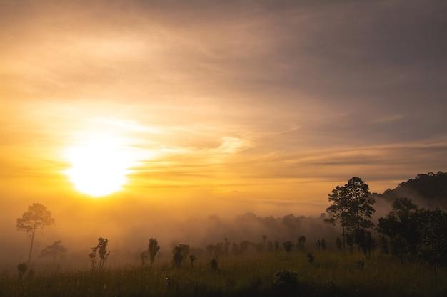 Пейзаж с лугами и деревьями в национальном парке тхунг салаенг луанг