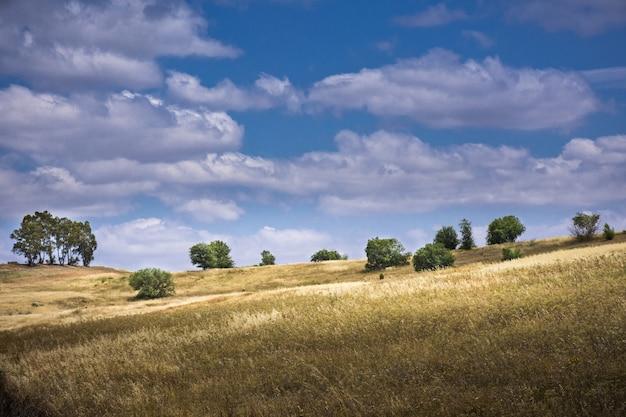 흐린 하늘에 대 한 말린 잔디와 나무와 흐린 하늘에 대 한 나무와 언덕의 풍경