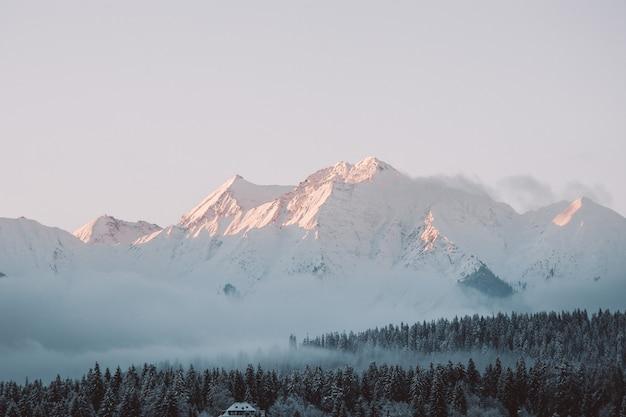 日光と曇り空の下で雪に覆われた丘と森の風景