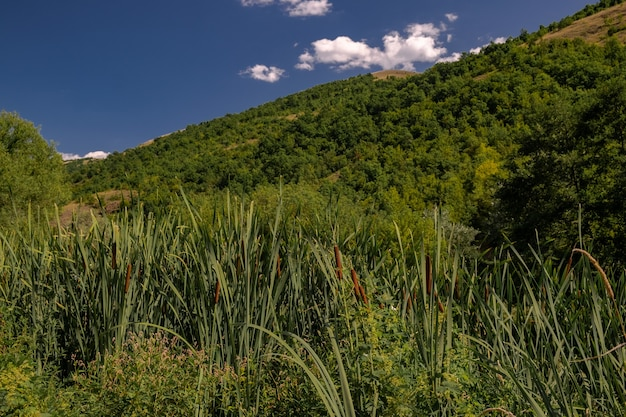 日光と青い空の下で茂みや木々に覆われた丘の風景