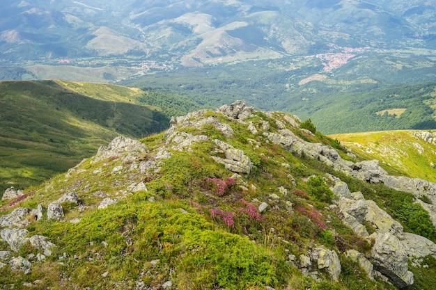 Пейзаж холмов, покрытых травой и цветами, с горами под солнечным светом на заднем плане