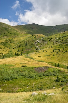 曇り空と日中の日光の下で草や木々に覆われた丘の風景