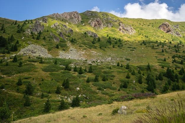青い空と日中の日光の下で緑に覆われた丘の風景