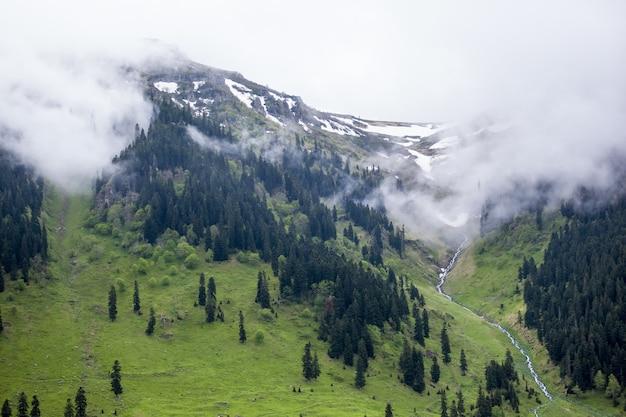 霧に覆われた丘と曇り空の下で雪に囲まれた森の風景