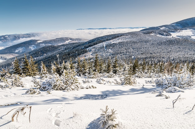 낮에는 햇빛 아래 눈과 숲으로 덮인 언덕의 풍경