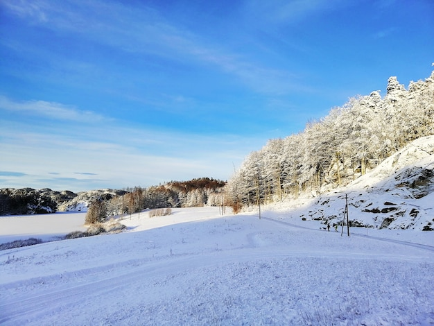 Пейзаж холмов, покрытых деревьями и снегом под солнечным светом и голубым небом в ларвике в норвегии