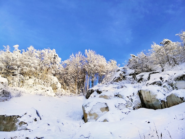 ノルウェーのラルヴィークの日光と青い空の下で木々と雪に覆われた丘の風景