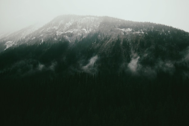 日光の下で森に覆われた山の風景