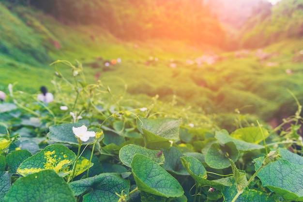자연 세계 유산, 카오야이, 태국의 풍경