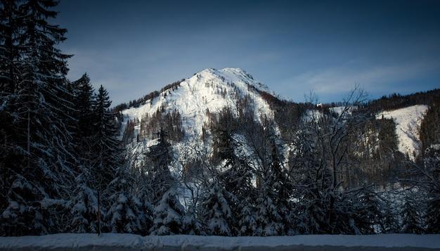 オーストリアの高いアルプスに生える古い暗い森の風景