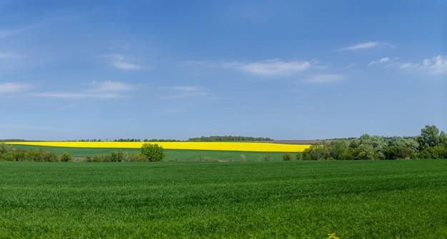 菜の花畑と草原が青空に映える風景