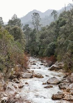 森の中の川の風景