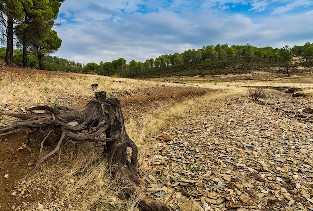 乾いた小川に根を張る風景