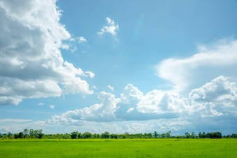 Landscape of sky with rice fields