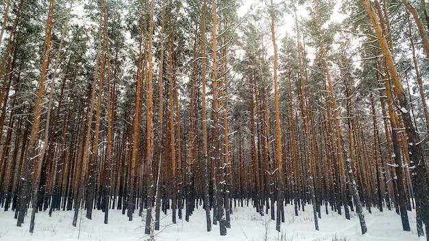 Пейзаж заснеженного леса холодным зимним утром