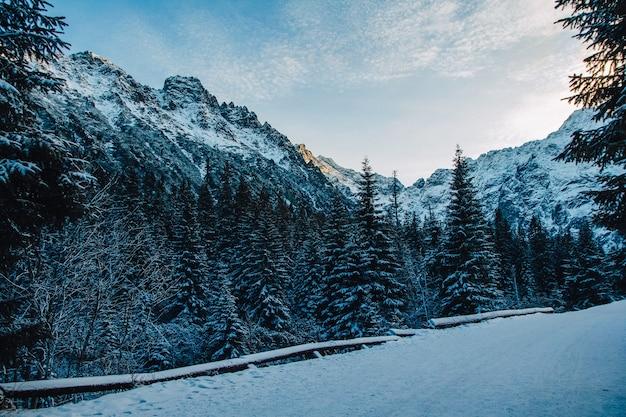 화창한 날씨에 로키 산맥의 눈 덮인 봉우리의 풍경