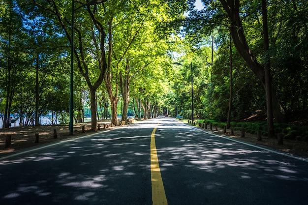 나무 아래 직선 도로의 풍경, 타이 둥, 대만의 유명한 longtien 녹색 터널.