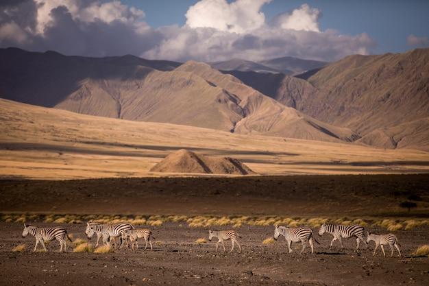 Пейзаж саванны танзании со святой горой ленгаи
