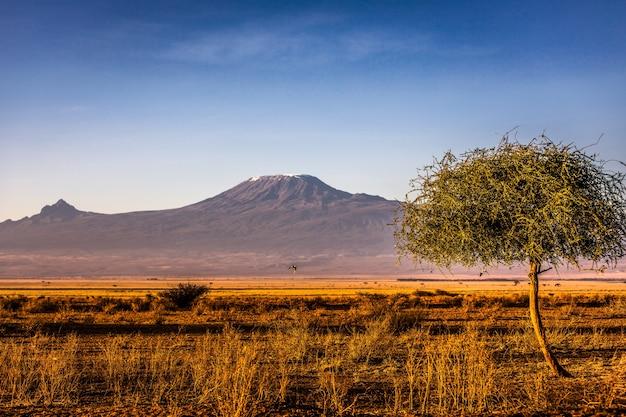 거룩한 산 lengai와 탄자니아 사바나의 풍경