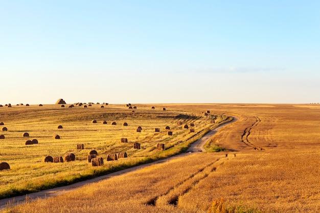 Пейзаж сельскохозяйственного поля с собранным урожаем рапса