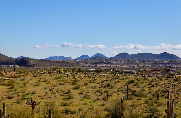 パノラマアリゾナ州フェニックスのサボテンと山岳都市の風景