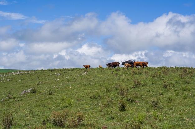 ガウチョ山の風景
