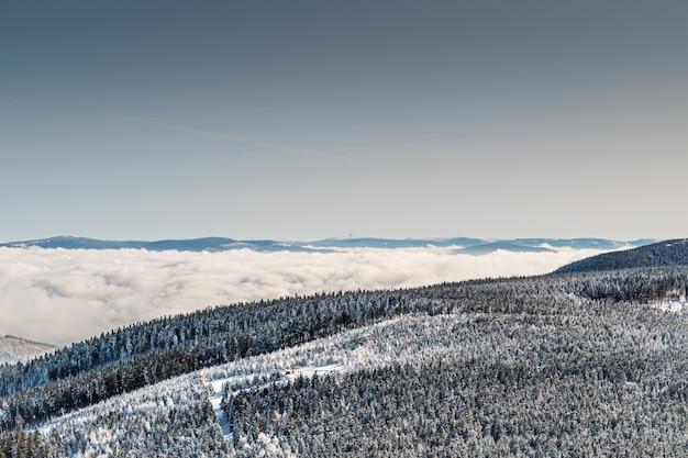 낮에는 햇빛 아래 숲과 눈으로 덮인 언덕의 풍경