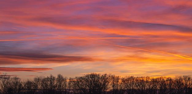 아름다운 핑크 일몰 동안 흐린 하늘 아래 나무 실루엣의 풍경