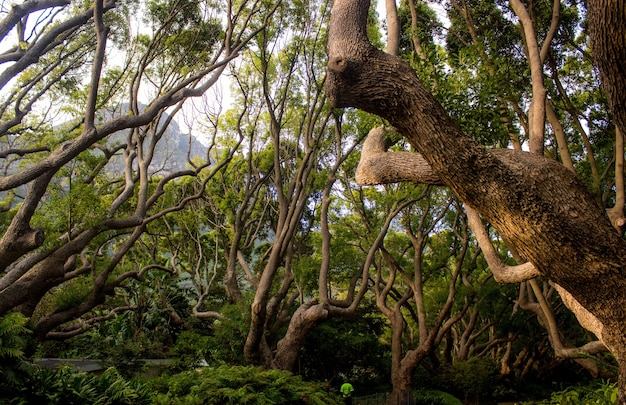 Пейзаж с деревьями и кустами в джунглях днем - идеально подходит для естественных представлений