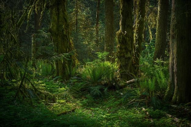 熱帯の緑の森の風景