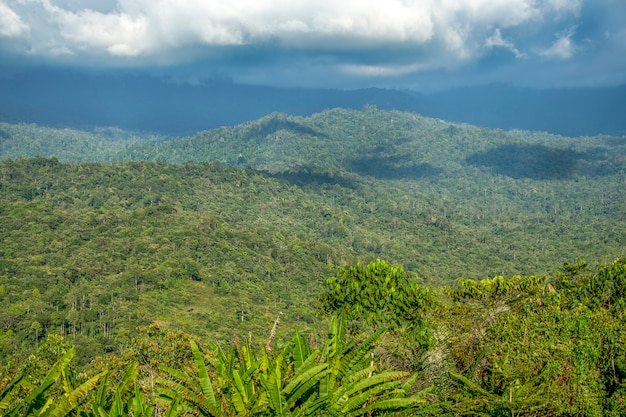 森の背景を持つボルネオの熱帯雨林の風景
