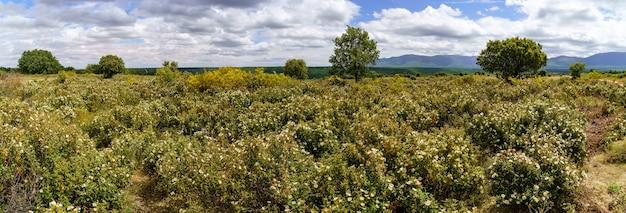 Пейзаж из белых, желтых, синих цветов