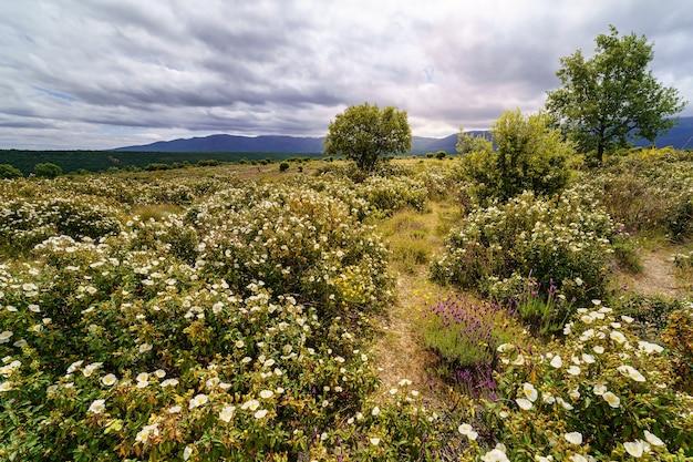 Белый пейзаж