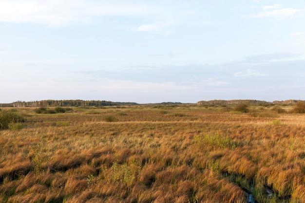 黄ばんだ乾いた草のある農地の風景