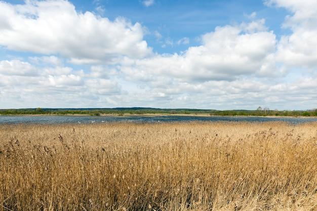 温暖化後の春の湖の風景、南から多くの渡り鳥が飛んできた