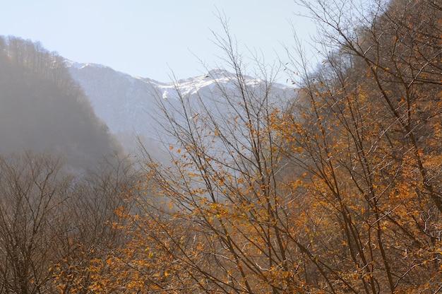 森、山、湖のある風景のパノラマ。アゼルバイジャン。コーカサス