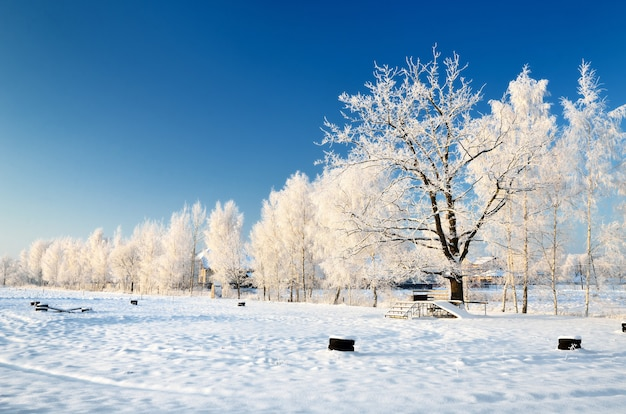 Landscape of a park covered in snow