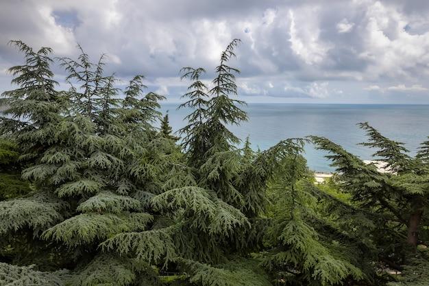 Ландшафтный парк с множеством редких вечнозеленых растений на берегу черного моря. кедры в айвазовском парке в партените