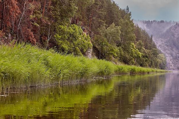 Пейзаж умиротворяющего летнего или весеннего таежного леса с тихой рекой, берегом и деревьями.