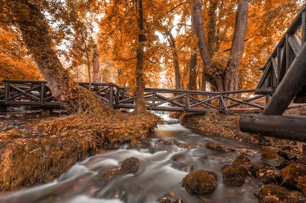 日没時の森の小川に架かる湾曲した損傷した木製の橋の風景写真