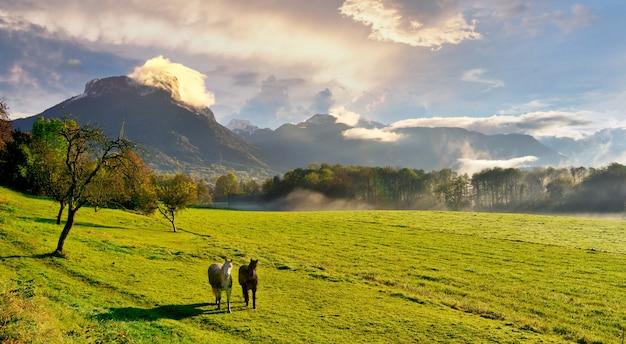 遠くに山と雲のある緑の牧草地の馬の風景写真