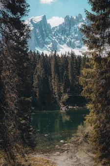緑の葉の木の風景写真