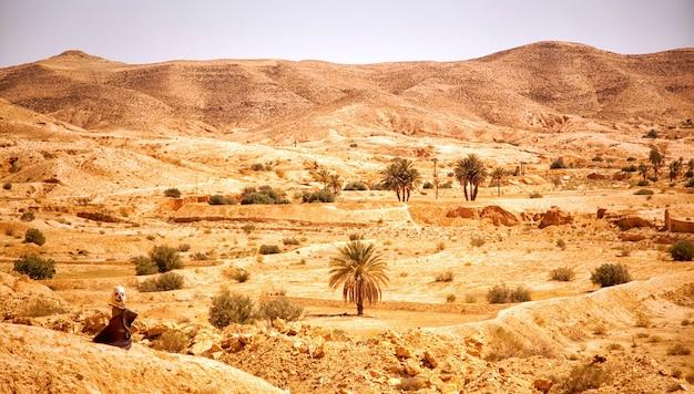 사하라 사막의 오아시스에 있는 모래 언덕과 나무의 풍경 사진. 아프리카 튀니지 토주르 시 근처에 모래 언덕, 초목, 박제 동물이 있는 광활한 사막의 전망