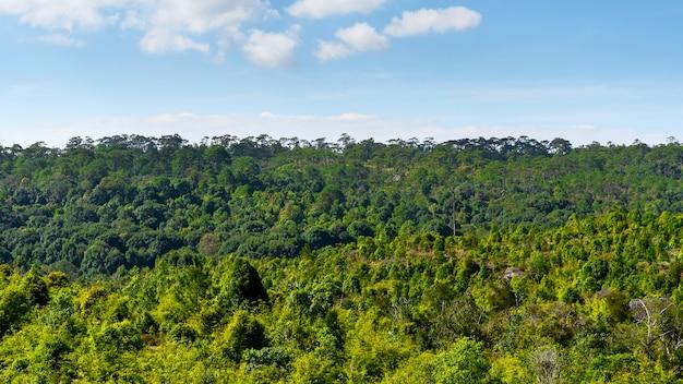 Landscape pine forest.
